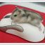 Как настроить чувствительность и другие функции мыши в Windows 10. Как расширить возможности мыши