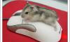 Как настроить чувствительность мыши в Windows 10.